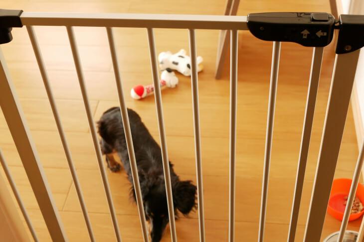 スチールゲートの向こうにある小型犬画像