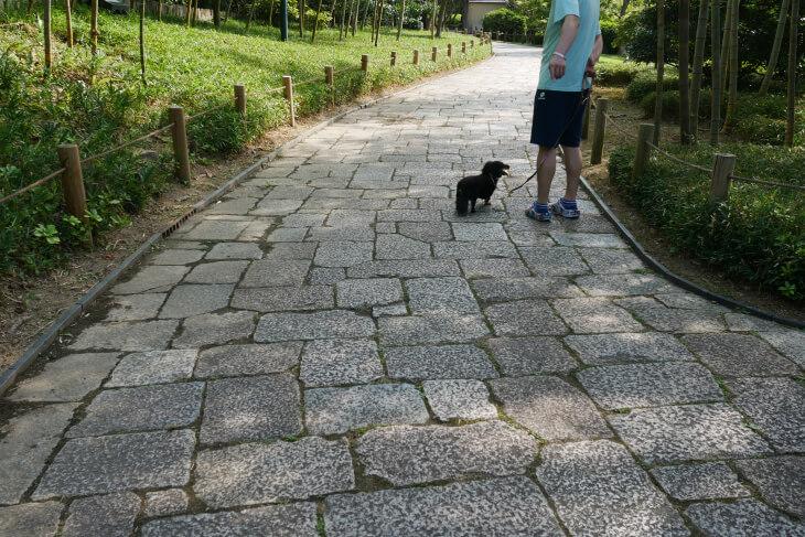 しあわせの村 日本庭園石畳画像