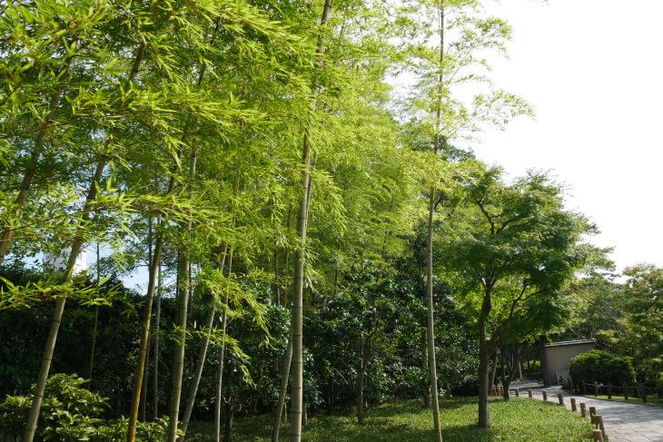 しあわせの村 日本庭園内にある竹林画像
